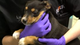 ASPCA COVID-19 Relief & Recovery Initiative