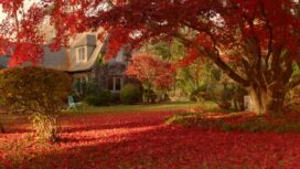 Fall Home Improvement with Chip Wade