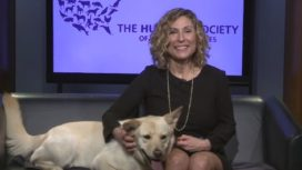 U.S. HUMANE SOCIETY SAVES DOGS FROM DOG MEAT FARMS